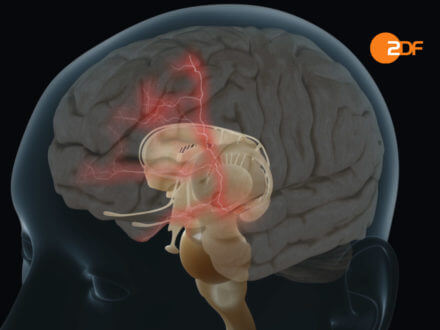Transparent head 3D animated to show the influences of music in the brain