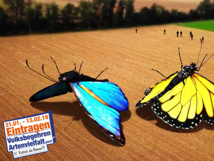 giant butterflies on the floor 3d animation and drone shot